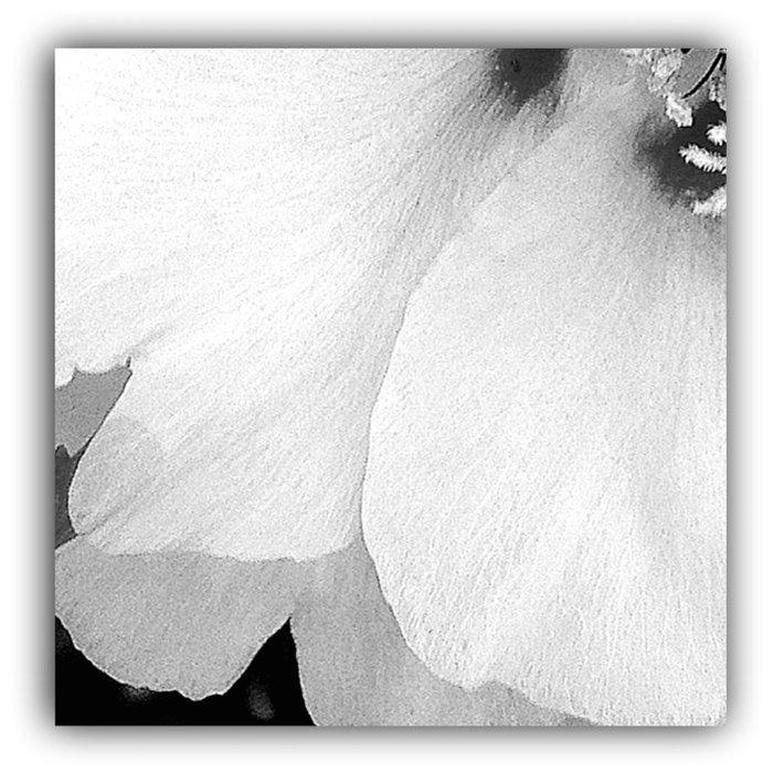 Flower | Flowers | White Petals | Macro Nature Comforters