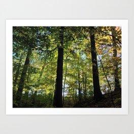 DEEP WOODS FALL SUNRISE (Crescent Trail, Fairport, NY) Art Print