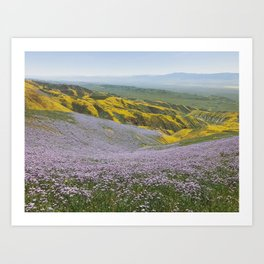 California Wildflowers Art Print