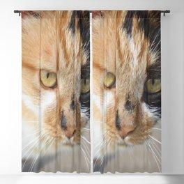 Orange Black and White Tricolor Cat Blackout Curtain