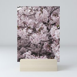Sakura II Mini Art Print