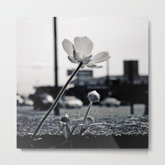Roadside beauty Metal Print
