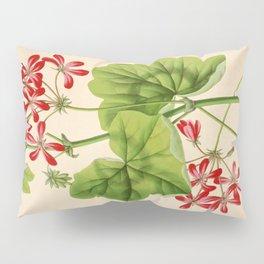 Pelargonium Hederifolium Vintage Botanical Floral Flower Plant Scientific Illustration Pillow Sham