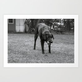 Play Dog Art Print