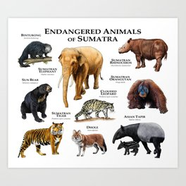 Endangered Animals of Sumatra Art Print