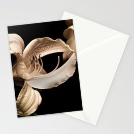 Touching Petals Stationery Cards