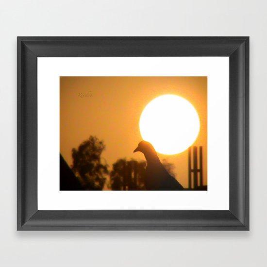 Pigeon Eclipse Framed Art Print
