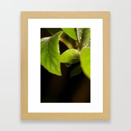 Rain drop leaf Framed Art Print