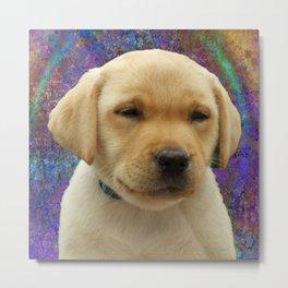 Lab Puppy Metal Print