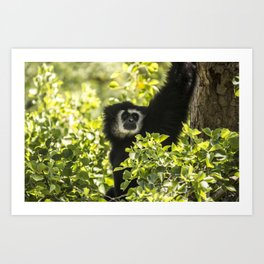Black monkey Art Print