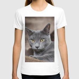 cute gray cat T-shirt