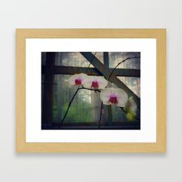 Hothouse Orchids Framed Art Print