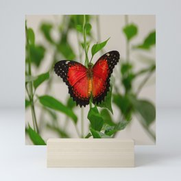 Red Lacewing Butterfly Mini Art Print