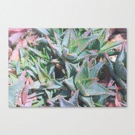 Pastel babies soft succulent print no.4 Canvas Print