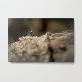 Libelula Azul, Blue Libelula Metal Print