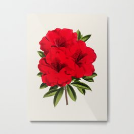 Vintage Botanical Illustration Beautiful Red Azalea Flower Floral Drawing Metal Print