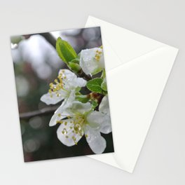 White Blossoms (*Koinonia*) Stationery Cards