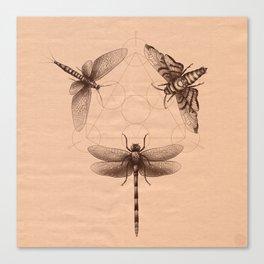 Dark Insect's Black Magic Canvas Print