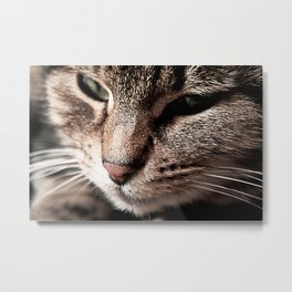 Cat on the Bed Metal Print
