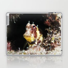 Triplespot Blenny Laptop & iPad Skin
