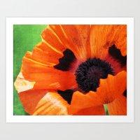 poppy Art Prints featuring POPPY by Teresa Chipperfield Studios