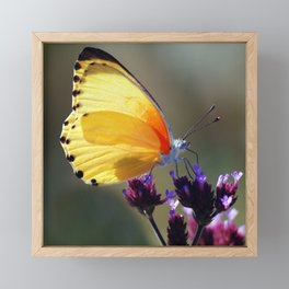 Yellow butterfly Framed Mini Art Print