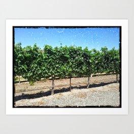 Santa Barbara Vineyard Art Print