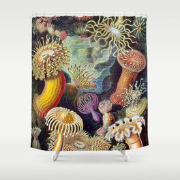 Anemones by Haeckel (Sea Plants and Flowers) Shower Curtain