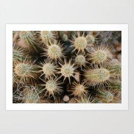 Desert Hedgehogs Art Print