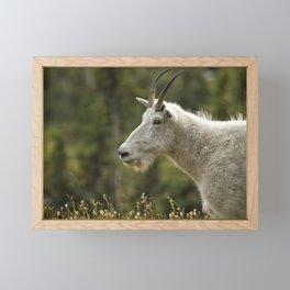Age and Wisdom in a Mountain Goat Framed Mini Art Print
