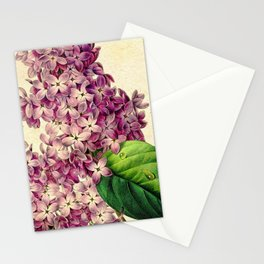 May Lilacs Stationery Cards