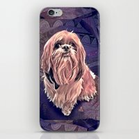 shih tzu iPhone & iPod Skins featuring shih tzu smile by elissa iatridis