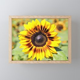 Sunflower in the Meadow by Reay of Light Framed Mini Art Print