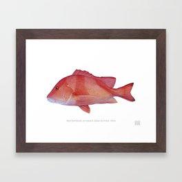Red Emperor Framed Art Print