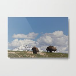 Rocky Mountain Bison Metal Print