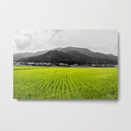 Rice Fields Metal Print