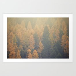 Larch Art Print