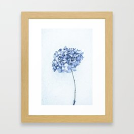 Hydrangea Blue 2 Framed Art Print