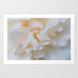 Rose - Flower Photography Art Print