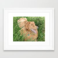 conan Framed Art Prints featuring Golden Retriever Conan by Yvonne Carter