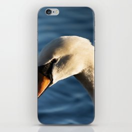 Swan in the afternoon iPhone Skin