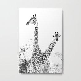between giraffes Metal Print