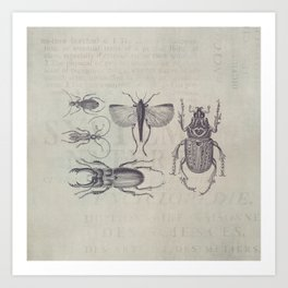 Vintage Beetles And Bugs Art Print