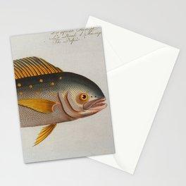 Vintage Dolphinfish Illustration (1785) Stationery Cards