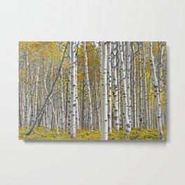 Birch Tree Grove in Autumn Metal Print