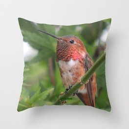 Hummingbird in the Japanese Maple Throw Pillow
