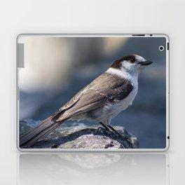 Curious Gray Jay Laptop & iPad Skin