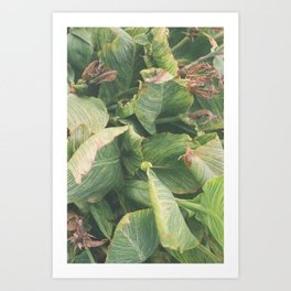 Foliage No. 1 Art Print