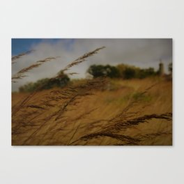 Amber Waves Canvas Print
