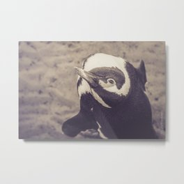 Adorable African Penguin Series 4 of 4 Metal Print
